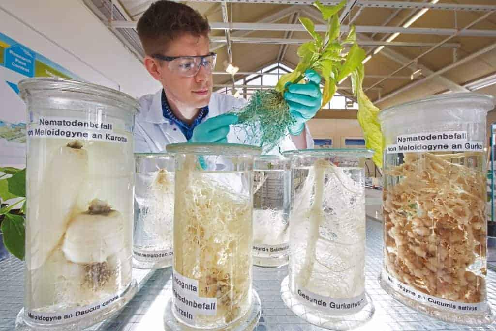 Wissenschaftler von Bayer arbeiten an innovativen Lösungen, mit deren Hilfe Farmer schwierige agronomische Herausforderungen meistern sowie produktiver und profitabler arbeiten können.
